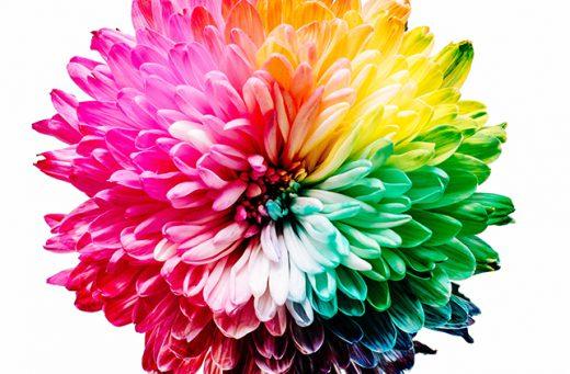 Blume in allen Farben des Regenbogens als Symbol für Coverdesign
