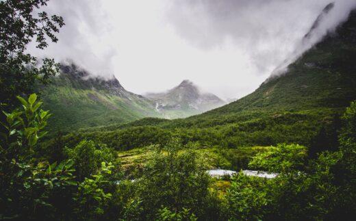 grünes Tal mit Bergen und Nebel